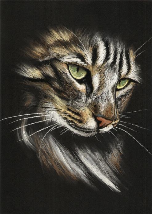 Rysunek Obraz Kot Kotek Na Prezent 7204520706 Oficjalne Archiwum