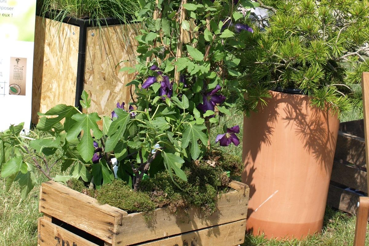záhrada v kontajneri