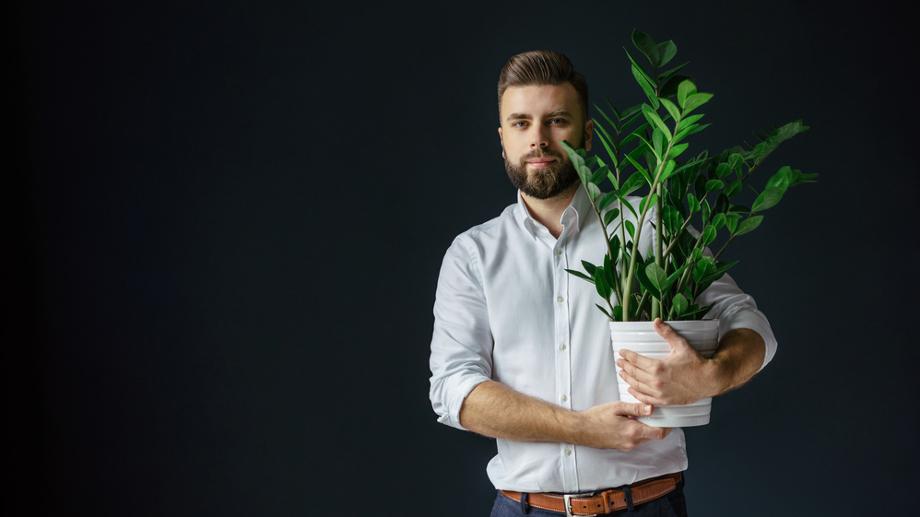 Rośliny W Pomieszczeniu Bez Okna Pielęgnacja Allegropl