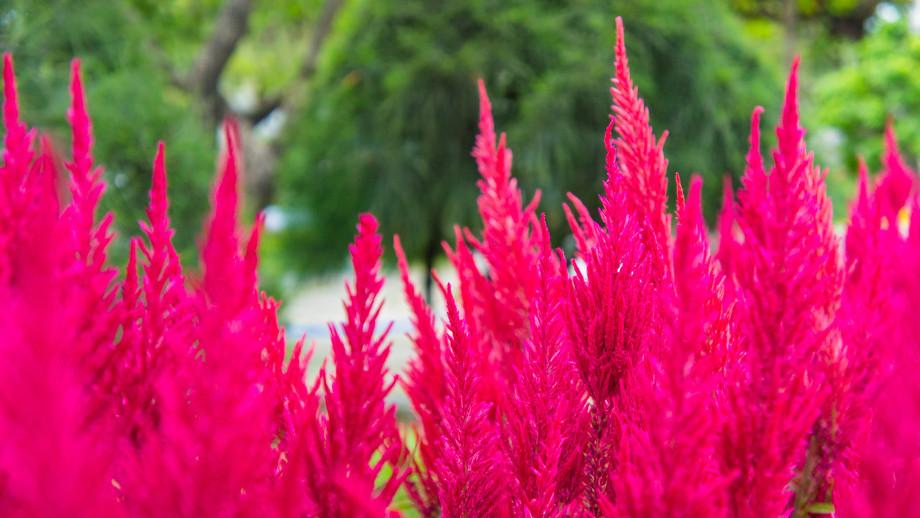 Ozdobne Trawy Kolorowe Allegro Pl