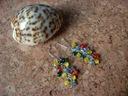 Kolczyki Grona Kolorowe Kocie Oczy