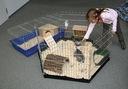 Kojec wybieg klatka dla królika psa OSŁONA GRATIS Rodzaj kojec