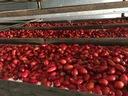 Skórki Owoce Dzika Róża Owoc Dzikiej Róży 1Kg Waga (z opakowaniem) 1.2 kg