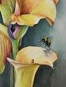 Akwarela kwiaty żółta kalia i pszczoła 32/24 (A4+)