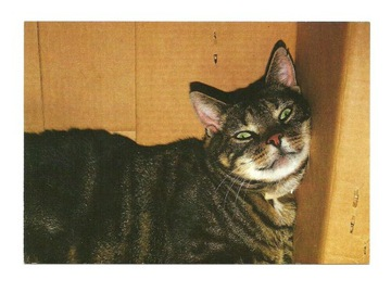 Pocztówka - Kot wtulony w kartonowe pudło / koty доставка товаров из Польши и Allegro на русском
