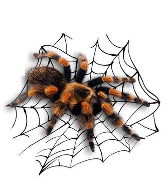 Pavúk, nálepky na tarantule na bicykel, prilbu, telefón