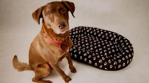 LEGOWISKA dla Psa kojec PONTON łapki XXXL115x90 R5